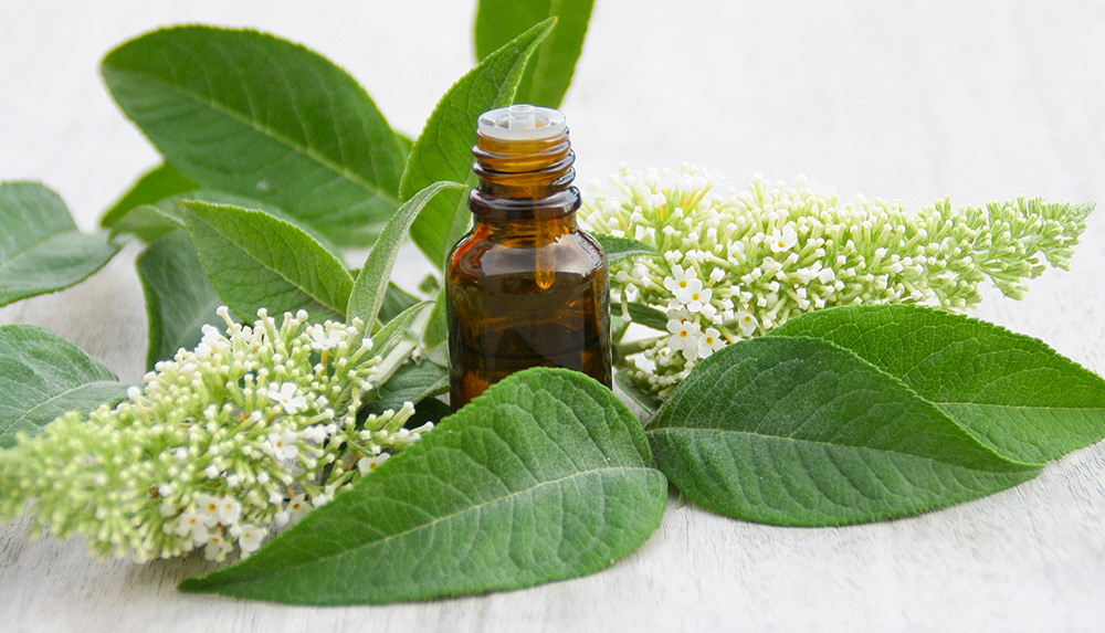 Pourquoi choisir une huile essentielle HEBBD ?