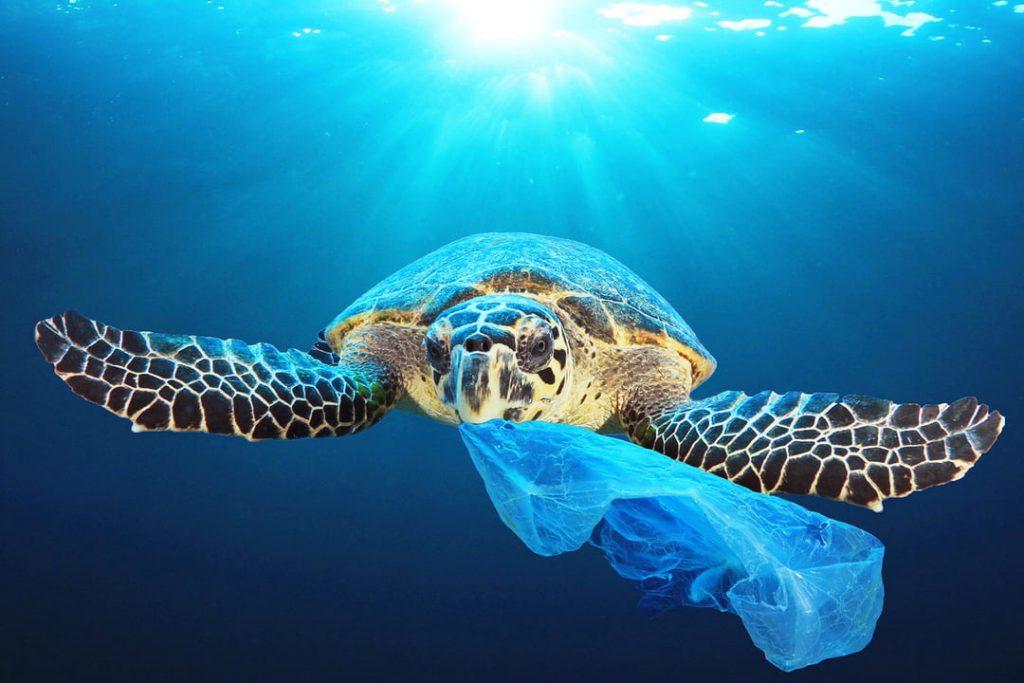 Le plastique : un danger pour la biodiversité marine